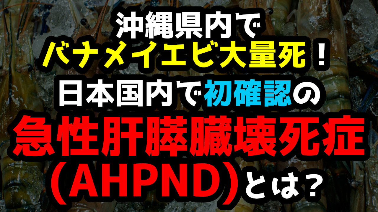 沖縄県内でバナメイエビ大量死!日本国内で初確認の急性肝膵臓壊死症 ...